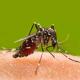 Come combattere le zanzare in giardino, in casa e in modo naturale