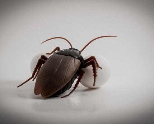 Riproduzione scarafaggi: come evitare un'infestazione